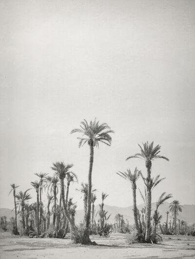 Silke Lauffs, 'The Palmeraie, Marrakech, Morocco', 2018