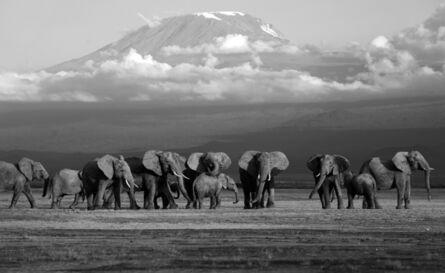 Griet Van Malderen, 'Elephants, Amboseli, Kenya', 2019