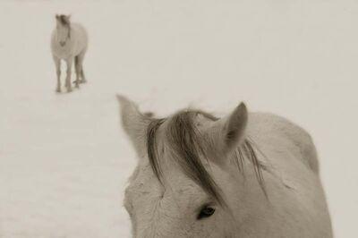 Jack Spencer, 'Snow Ponies, Truchas, New Mexico', 2006