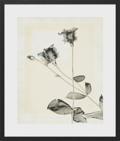 Thomas Ruff, 'flower.s.23', 2018