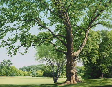 Anita Mazzucca, 'A Very Large Tree on Bayonet Farm', 2017