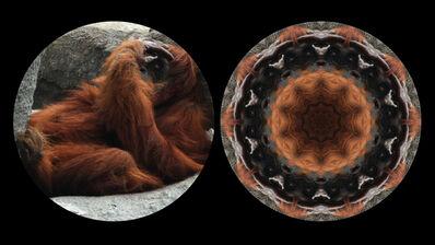 Leslie Thornton, 'Orangutan', 2010