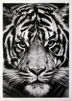 Robert Longo, 'Untitled (Tiger)', 2012