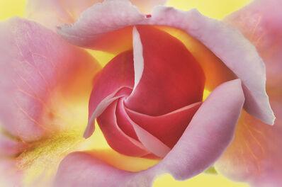 Robert Llewellyn, 'Rose 20', 2010-2019