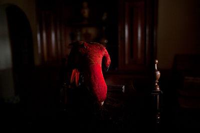 João Castilho, 'Arara Vermelha I (da série Zoo) | Scarlet Macaw I (series Zoo)', 2015