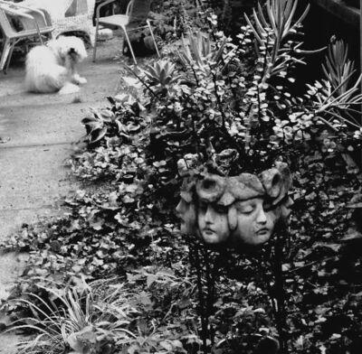 Nancy Catandella, 'Joan's Garden', 2019