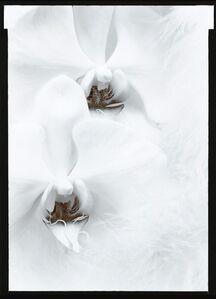 Olivia Parker, 'Orchids', 1976