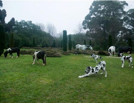 Bethan Huws, 'Black & White Animals, Porto ', 2009