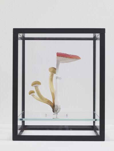 Carsten Höller, 'Double Mushroom Vitrine (once) Fliegenpilz - Fly Agaric - Amanita muscaria / Honiggelber Hallimasch - Yellow Honey Fungus - Armillaria mellea', 2014