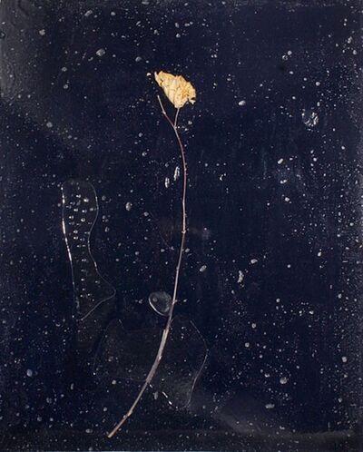 Barbara Salvucci, 'Nera battesimale', 2010