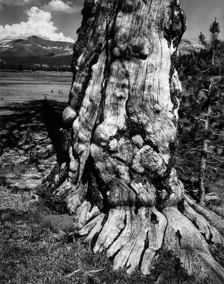 Ansel Adams, 'Tuolomne Meadows', 1941
