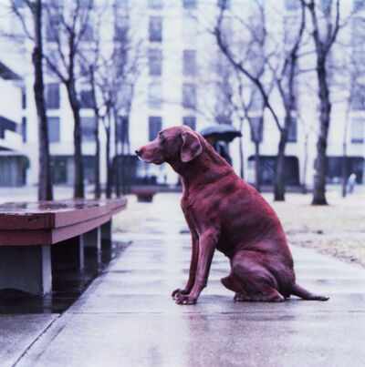 William Wegman, 'Red Dog (From Man Ray:  A Portfolio of 10 Photographs)', 1982