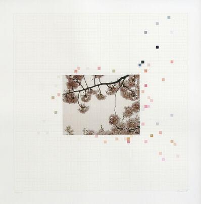 Darren Almond, 'Sakura Chart #0.09', 2006
