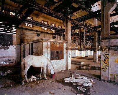"Thomas Jorion, '""Mirage"" Slaughterhouse, Casablanca Morocco', 2014"