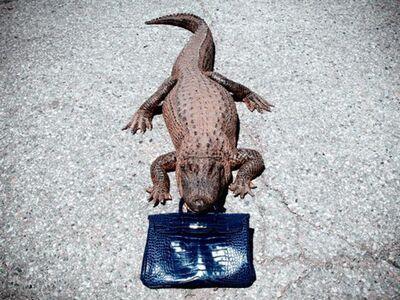Tyler Shields, 'Gator Birkin', 2012