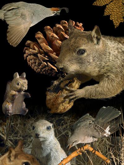 Brian Leatart, 'Squirrel Problem', 2014