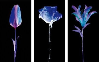 Yves Hayat, 'Fleurs Blessées (Wounded Flowers) ', 2017