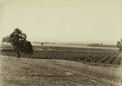 Carleton E. Watkins, 'Young Orchard, Palermo, Butte County', 1888-1891