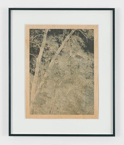 Clifford Ross, 'Trees I', 2010