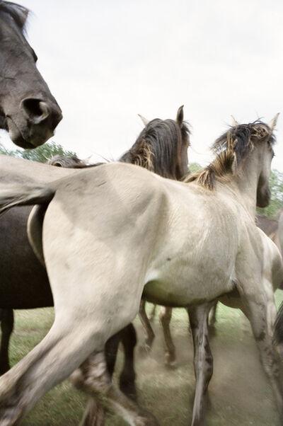 """Jitka Hanzlová, 'Untitled (Yearlings) from """"Horses""""', 2009"""
