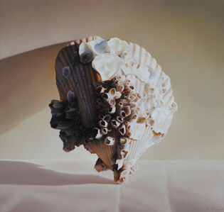 Michael Zigmond, 'Atlantic Cockle Shell', 2020