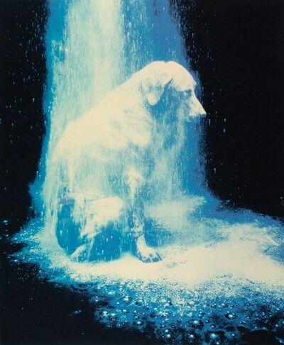 William Wegman, 'Portfolio (Elephant, Bad Dog, and Dusted) (3 works)', 1988
