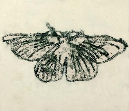 David Konigsberg, 'Moth #7', 2020