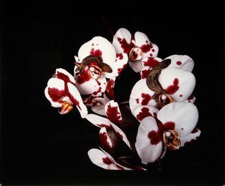 "Nobuyoshi Araki, 'Untitled, from the series ""Flowers and Jamorinsky""', 2005-2006"