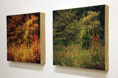 Helen Sear, 'St Helens Wood (Quartet)', 2013