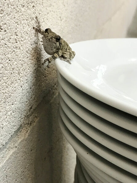 Juergen Teller, 'Frogs and Plates No.29, London', 2016