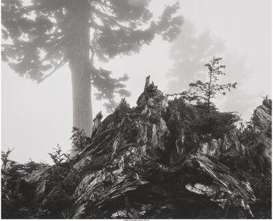 Ansel Adams, 'Tree, Stump and Mist, Northern Cascades, Washington, from Portfolio VII', 1958