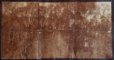 """Koichiro Kurita, '""""Edge of Forest"""" Ipswich, MA', 2015"""