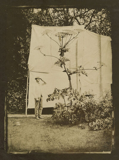 Anonymous, 'Giant Hogweed Plant, Possibly in Kew Gardens, London', 1860c / 1860c