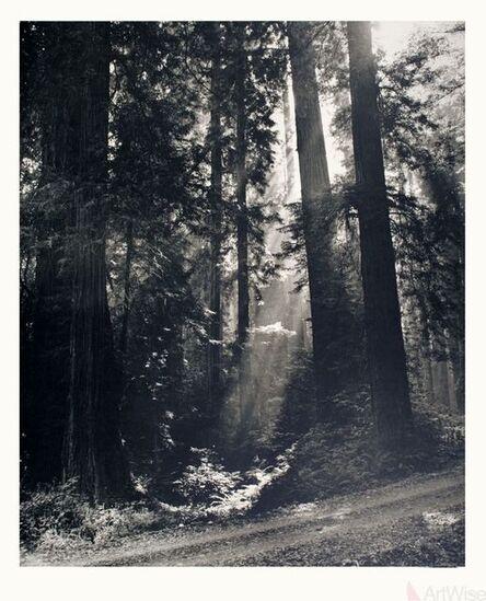 N.R. Farbman, 'Redwood Forest', 1972