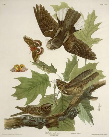 Robert Havell after John James Audubon, 'Whip-poor-will', 1830