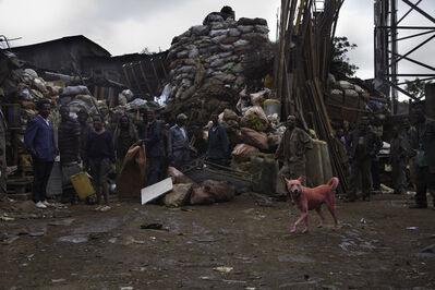 Julian Charrière & Julius von Bismarck, 'some dogs are pink...', 2012