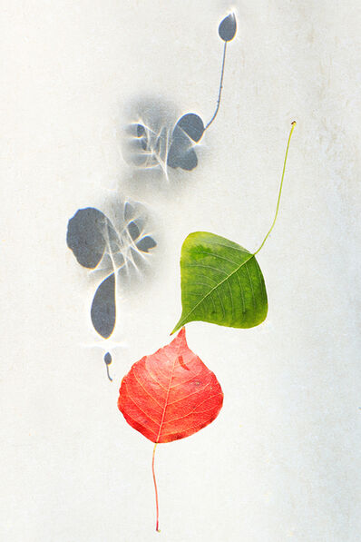 Larry Garmezy, 'First Kiss - Botanical, Floral photography, abstract waterscape, autumn leaves, fine art photography, shadows, minimalist, serene, relaxing', 2020