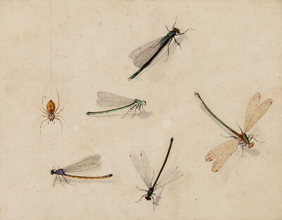 Master of the Arundel Sketchbook, 'Dragonflies and a spider', ca. 1640