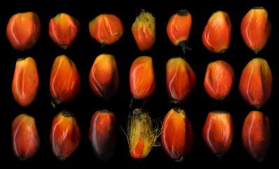 Angki Purbandono, 'Sawit Seeds', 2017