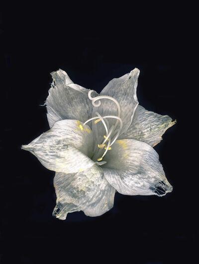 Jitka Hanzlová, 'Fish Friends Flowers #13', 2011