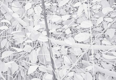 Bill Richards, 'Crossed Branches', 2013