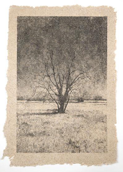 Matthew Brandt, 'Tree 39'