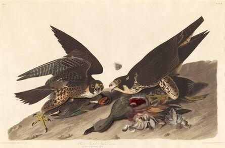 Robert Havell after John James Audubon, 'Great Footed Hawk', 1827