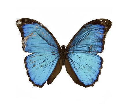Stoney Road Press '16', ''Roger Casement's Butterfly' by Artist Kathy Prendergast', 2105