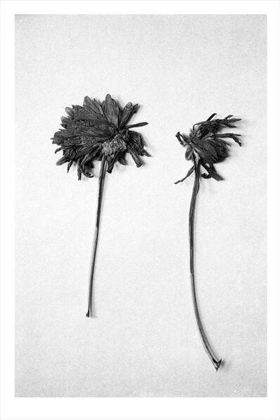 Douglas Kirkland, 'Our Secret Garden', 1972