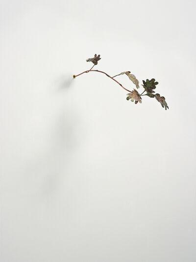 Rolf Nowotny, 'Pinocchio Leaves (oak)', 2013