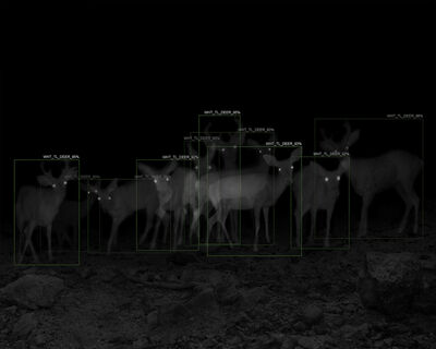 Alex Turner, '10 White-Tailed Deer with A.I. Recognition, 1-Week Interval, Santa Rita Mountains, AZ', 2019