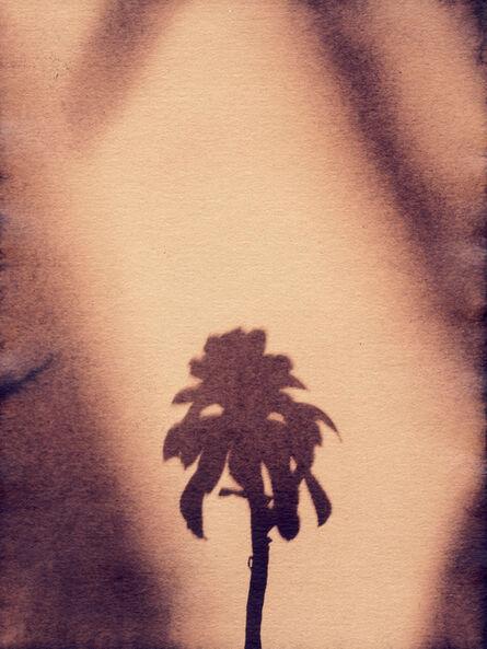 Sayako Sugawara, 'Little Palm III', 2020