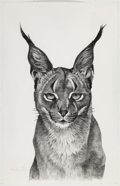 Rose Corcoran, 'Caracal Observing'