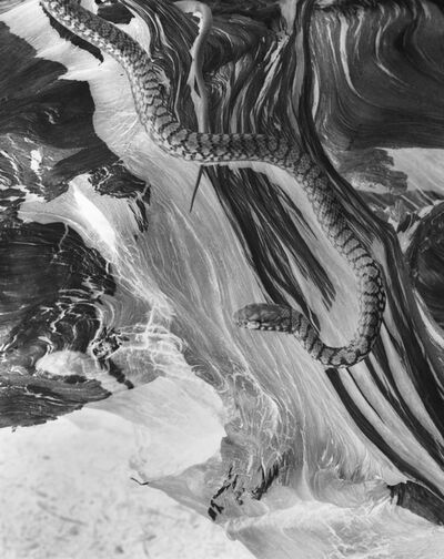 Imogen Cunningham, 'Snake (negative)', 1929